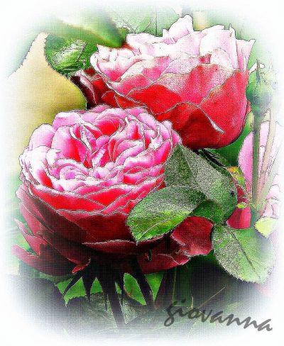 Petali di rose...