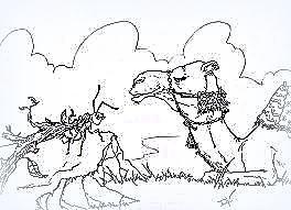 Il cammello e la formica...