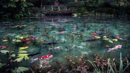 Giappone...incantevole natura.