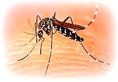 Sono una prescelta dalle zanzare... la scienza non sempre è vangelo...