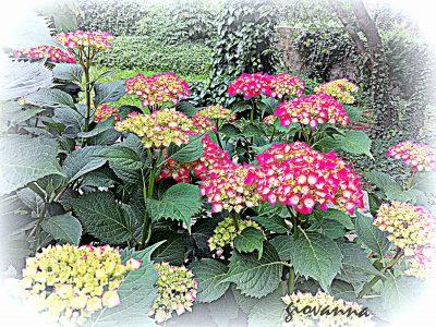 In giardino...
