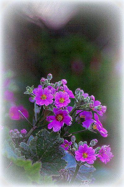 Vigilia di primavera...