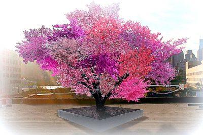 Un albero strepitoso oltre la bellezza...
