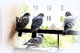 Chi avvelena i piccioni e sparge veleni per le strade anche per i topi, non uccide solo loro...Basta !!!